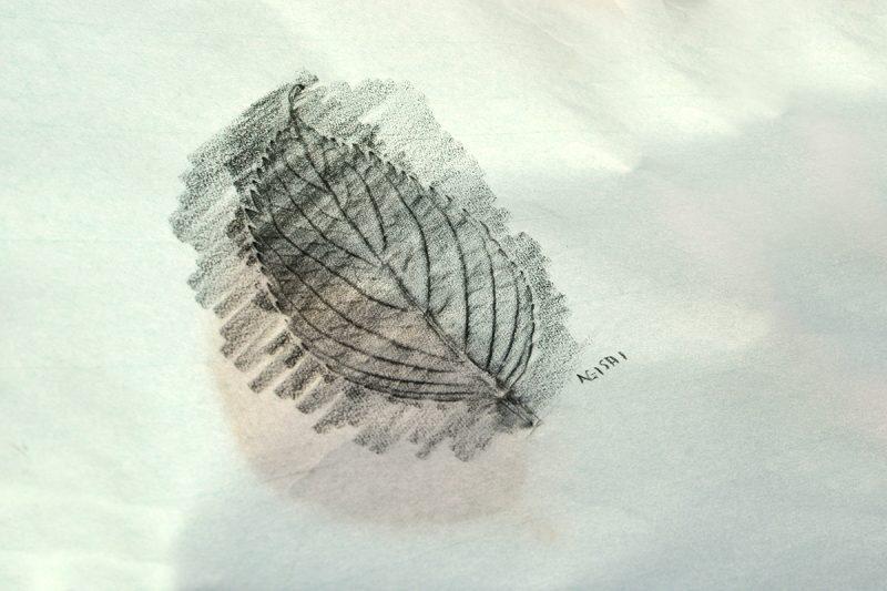 「らしさ」の抽出。フロッタージュによるデザイン素材づくり