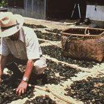 【日本唯一の完全発酵茶、400年以上の歴史】高知県大豊町に伝わる碁石茶の伝統製法を守りつなげる人を募集!