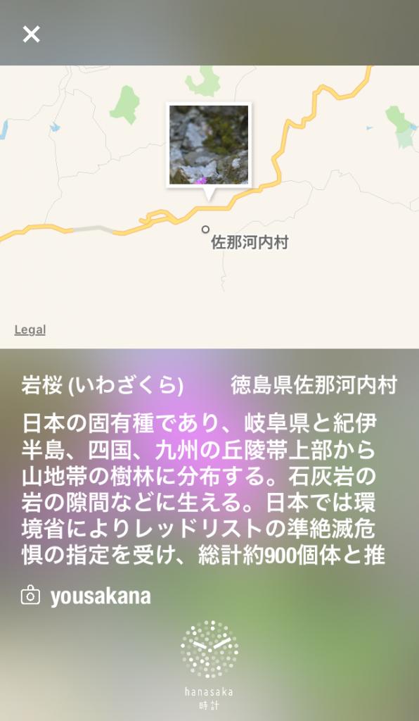 iwazakura_1