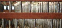 徳島県南部、日和佐と牟岐町の魚介の燻製や干物
