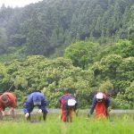 阿波藩のお殿様への献上米をつくっていた佐那河内村で御田植式