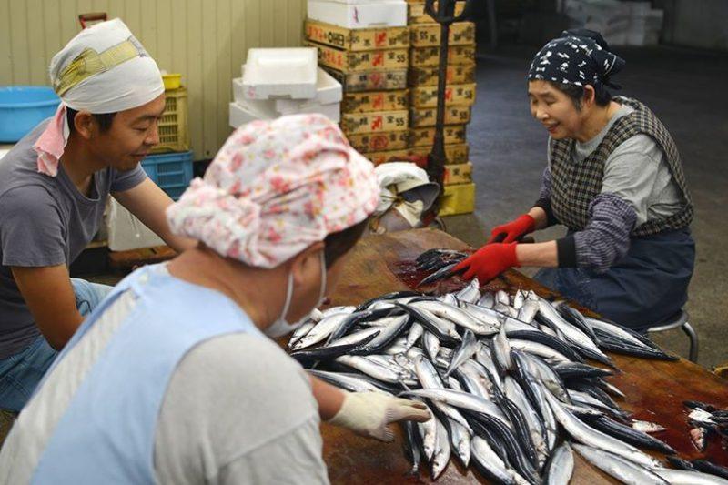創業江戸時代末期、徳島県牟岐町の老舗の干物屋、泉源(いずげん)