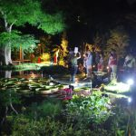 【8/12金~14日】夜の牧野植物園 Night botanical garden of Makino