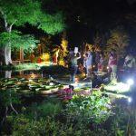 【8/12金~14日】夜の牧野植物園 Night botanical garden of Makino
