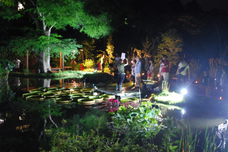 夜の牧野植物園 – Night botanical garden of Makino