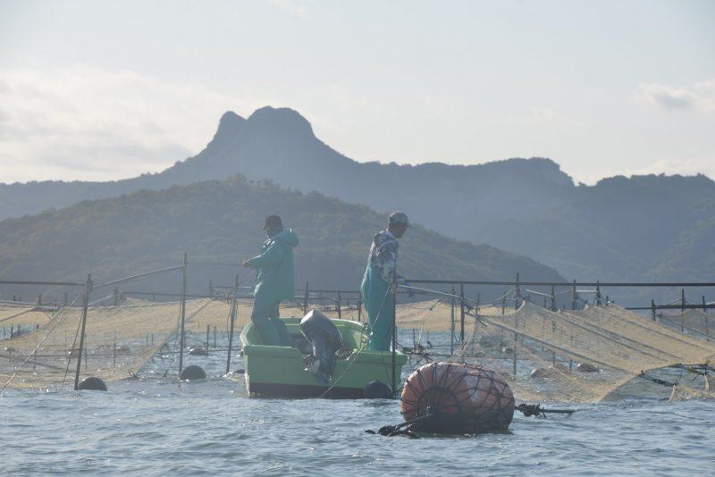 瀬戸内で育つ海の味、海苔(ノリ) – Seaweed of Seto Inland Sea