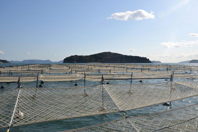瀬戸内海の海苔養殖