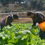【徳島】春の足音、バンドマンの菜の花農家。佐那河内村の菜の花農家 森崎