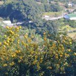 冬至は、村の柚子。徳島県最後の村、佐那河内村(さなごうちそん)