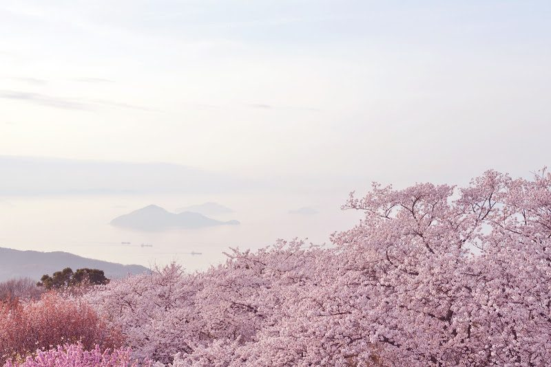 紫雲出山から見る瀬戸内海の島々と桜 The view to Islands of Seto Inland Sea from Mt. Shiude