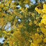 春の色で染まる村。さなごうち