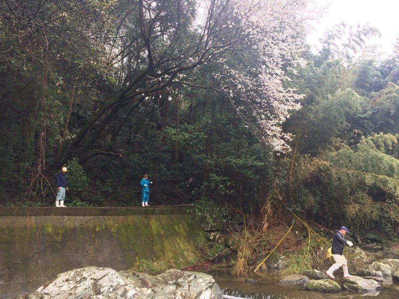 桜に見守られながら、川掃除