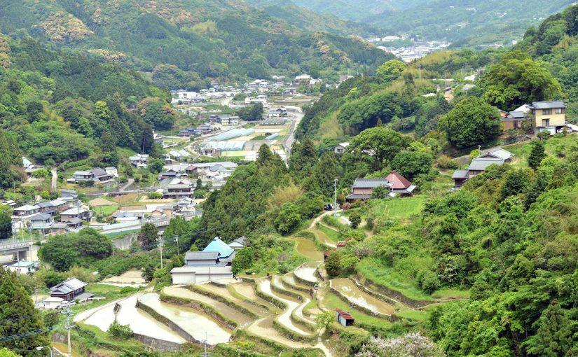 阿波藩のお殿様への献上米。村の棚田米 – Beautiful terraced rice-fields at Sanagochi village
