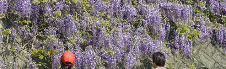 春の花を巡る山のフィールドワーク。さなごうち