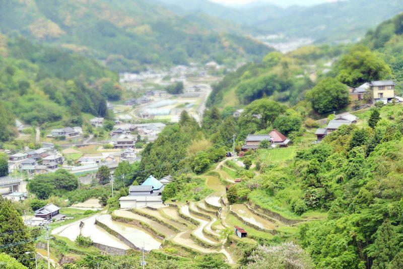阿波藩のお殿様への献上米。村の棚田米