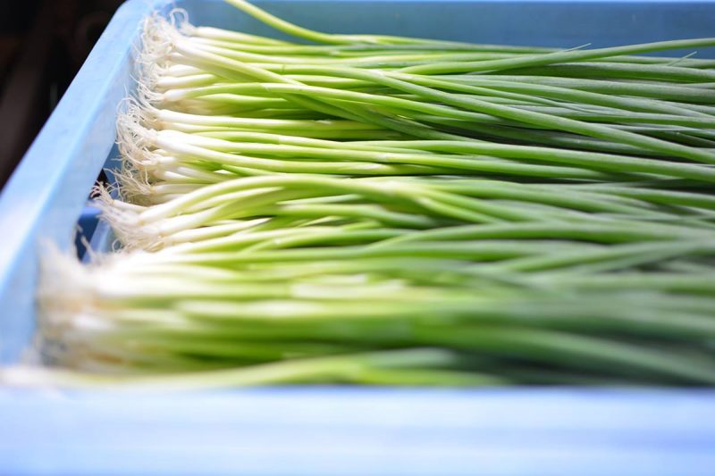 葱色のグラデーションが綺麗 Beautiful gradation of Japanese leeks