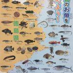 徳島でとれる魚たち