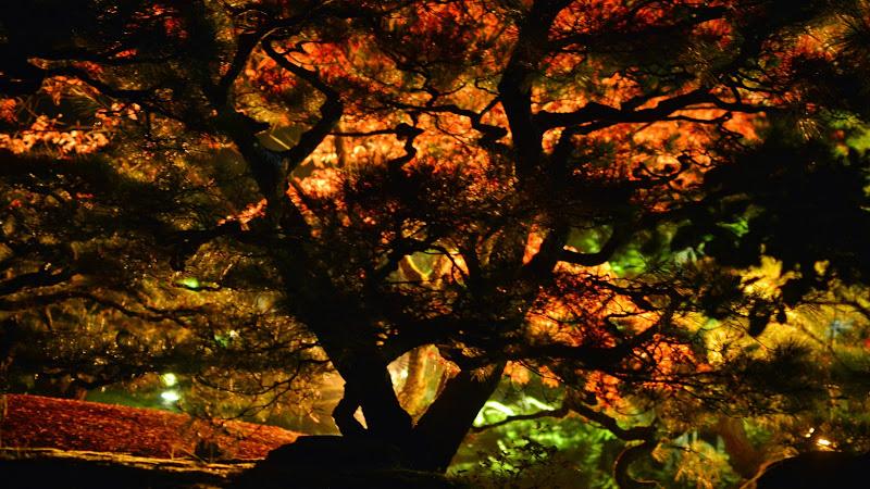 大名庭園 栗林公園 秋のライトアップ The autumn colors lighting-up at Ritsurin Garden