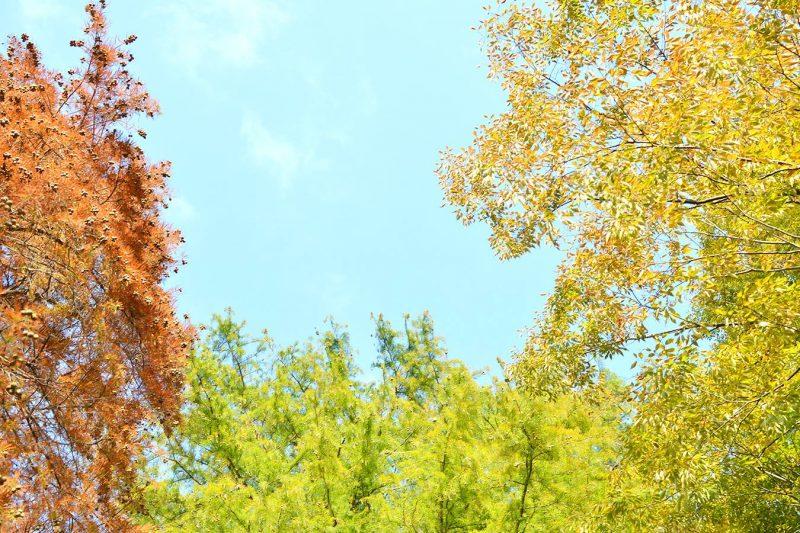 石神井公園の秋