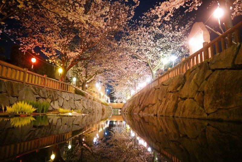 """水面に映る桜、鹿の井出水(しかのいですい) – """"Shikanoidesui"""" Deer well water"""