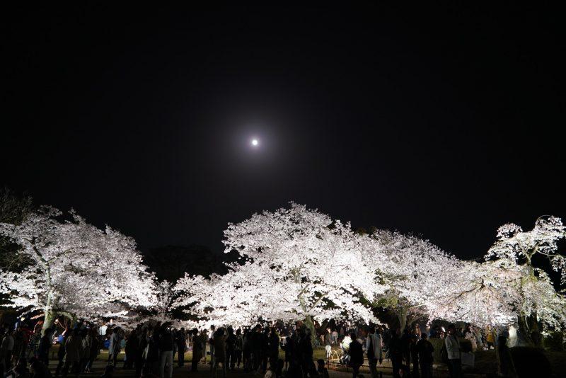 【香川 3/29(金)-4/7(日)】大名庭園・栗林公園、春のライトアップ – Night Cherry blossoms at Ritsurin Garden