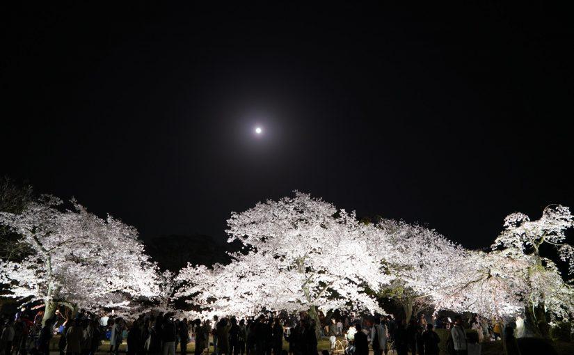大名庭園・栗林(りつりん)公園、春のライトアップ Nighttime event of Cherry blossoms in Ritsurin Garden