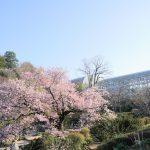高知県のオススメまとめ。山里亮太さん・蒼井優さんの結婚会見で「高知に行きたい」