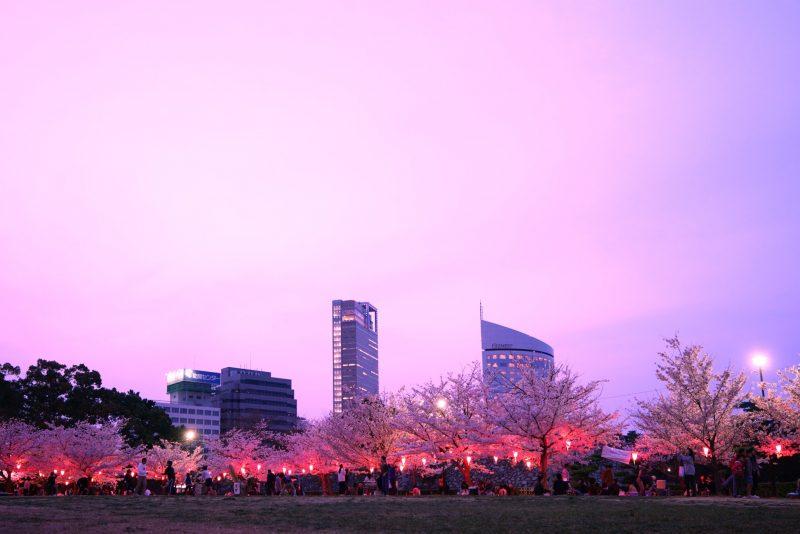 【香川・3/29(金)-4/10(水)夜間無料】高松城跡 玉藻公園で夜桜のライトアップ – Night cherry blossoms of Takamatsu Castle