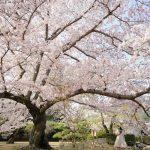 """【香川 3/16無料開放】国指定特別名勝・栗林公園の開館記念日 – [Kagawa March 16 Free] Special Beauty Spot """"Ritsurin Garden"""""""