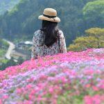 にほんの里100選 「高開(たかがい)石積み」の芝桜 Takagai's stone wall the 100 best villages in Japan
