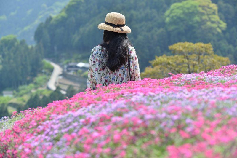 【徳島・4/1-21 天空の石積み】にほんの里100選 高開(たかがい)の芝桜 Takagai's stone wall the 100 best villages in Japan