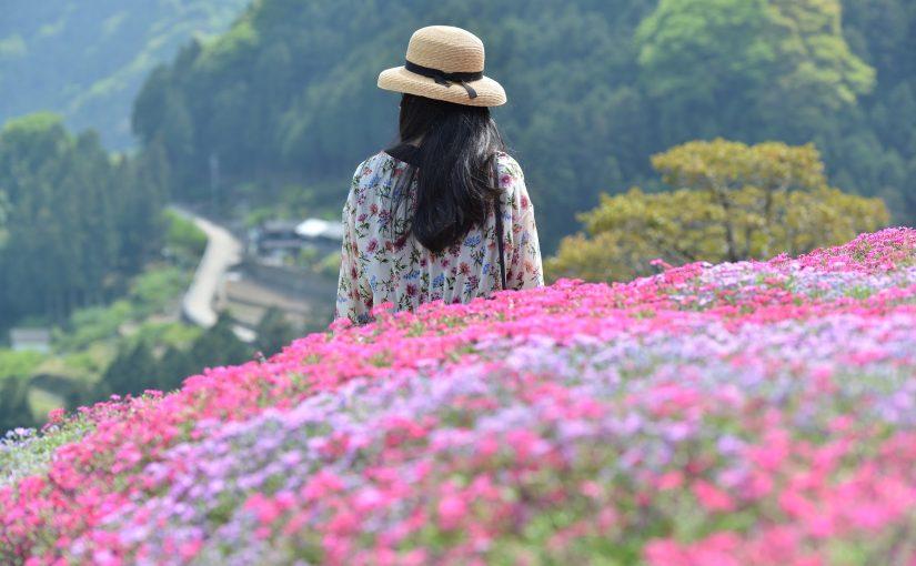 【徳島・天空の石積み】にほんの里100選 高開(たかがい)の芝桜 Takagai's stone wall the 100 best villages in Japan
