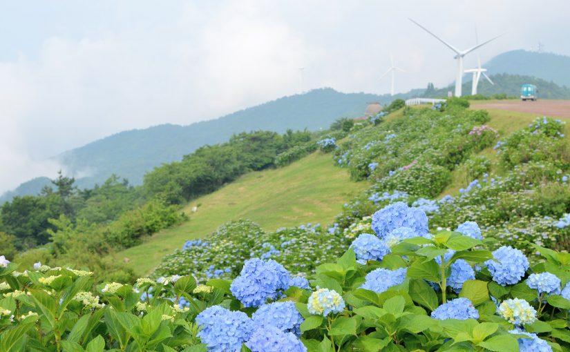 【四国八十八景に認定!】最後の村、大川原高原3万本の紫陽花(あじさい) – 30,000 hydrangeas at Okawara plateau, Sanagochi Village