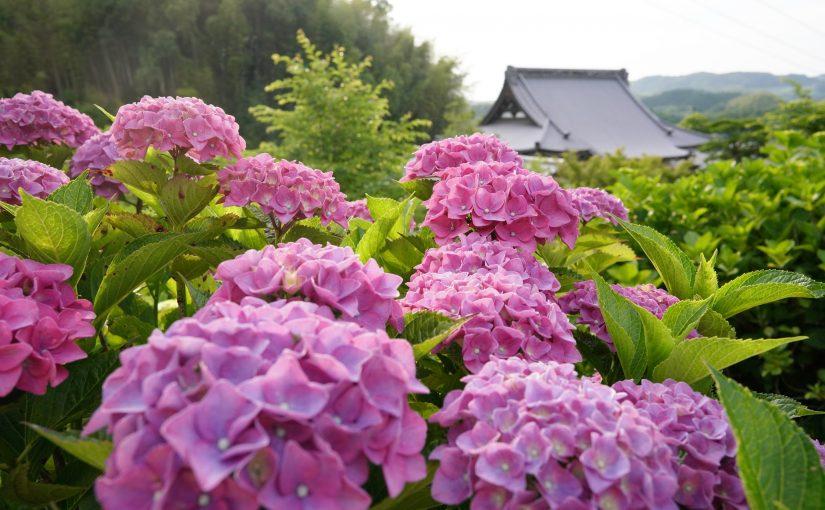 20種・1500株のあじさい。花の寺「勝名寺」 – shomyoji temple