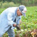 新居大島でしか出ない味、幻の白いも –  Precious white sweet potato of Niōshima island