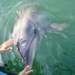 瀬戸内海でイルカと泳げる「ドルフィンセンター」 – Dolphin Center at Setouchi
