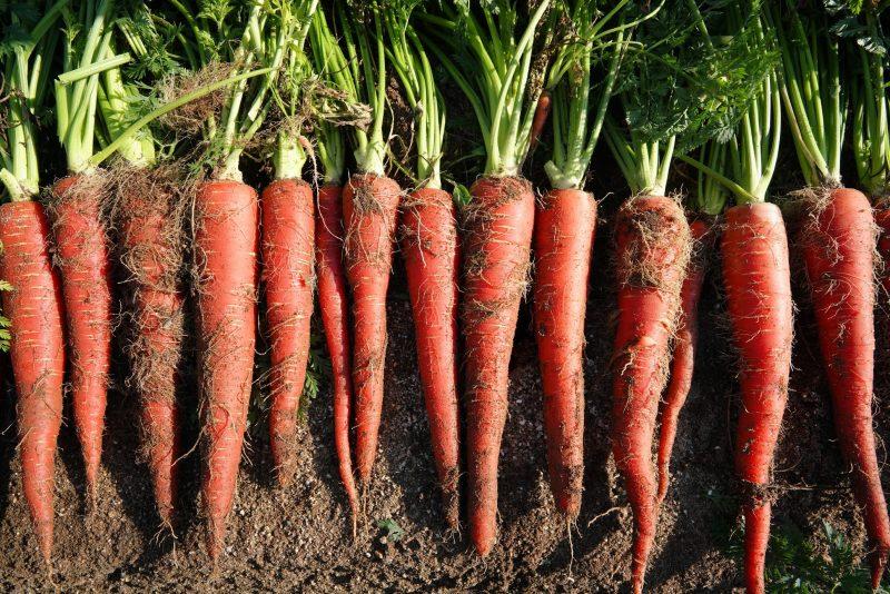 金時にんじん – Kintoki carrot