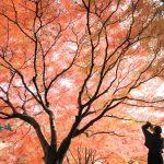 裏から眺める紅葉がオススメ。昼の大名庭園をあるく – Colors of autumn leaves at Ritsurin Garden