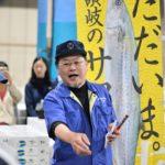 春を告げる鰆(さわら)の初競り – Japanese spanish mackerel is heralding the start of spring.