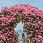 いい香り、港の小さな薔薇園 – Small rose garden at Takamatsu port.