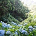 谷に咲く紫陽花。四国遍路最後の霊場、第88番札所の大窪寺 – Hydrangea and Okuboji temple