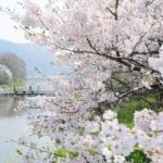 香東川桜の広場 – Plaza of Cherry blossoms at Koutougawa river