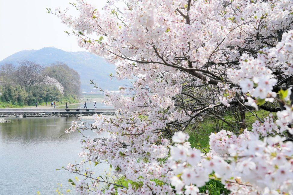 香東川桜の広場 – Plaza of Cherry blossoms at Koutougawa river