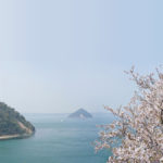 瀬戸内海、大崎の鼻の桜 – Cherry Blossoms of Osaki no hana, Setouchi