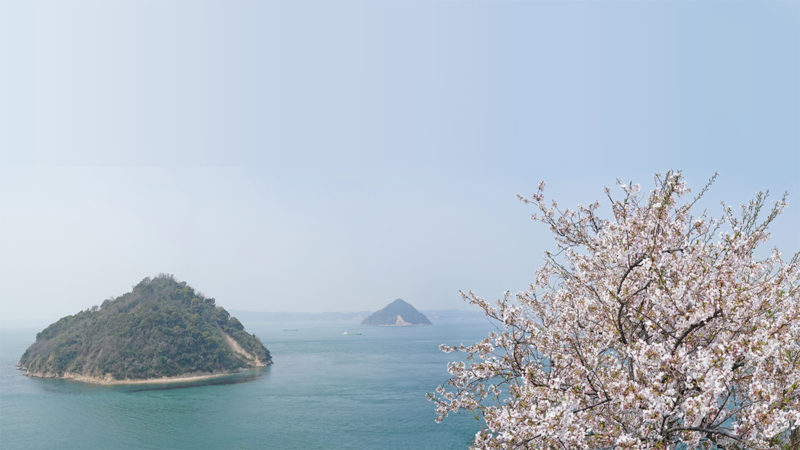 瀬戸内海、大崎の鼻の桜 – Cherry Blossoms of Osaki no hana, Setouchi