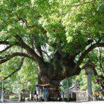【徳島】阿波國一の宮 大麻比古神社 – [Tokushima] Ōasahiko Shrine