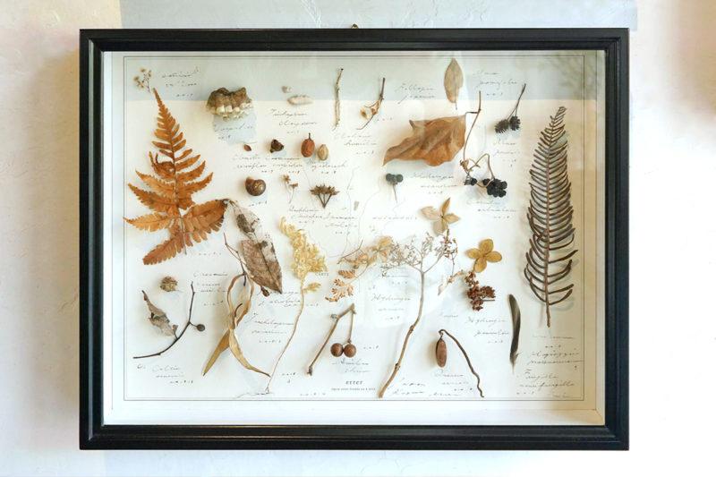 植物標本 Botanical specimen