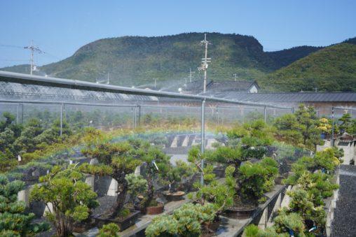 【香川】高松市は松盆栽の全国シェア80%!『高松盆栽の郷』 - [Kagawa] Bonsai Village of Takamatsu