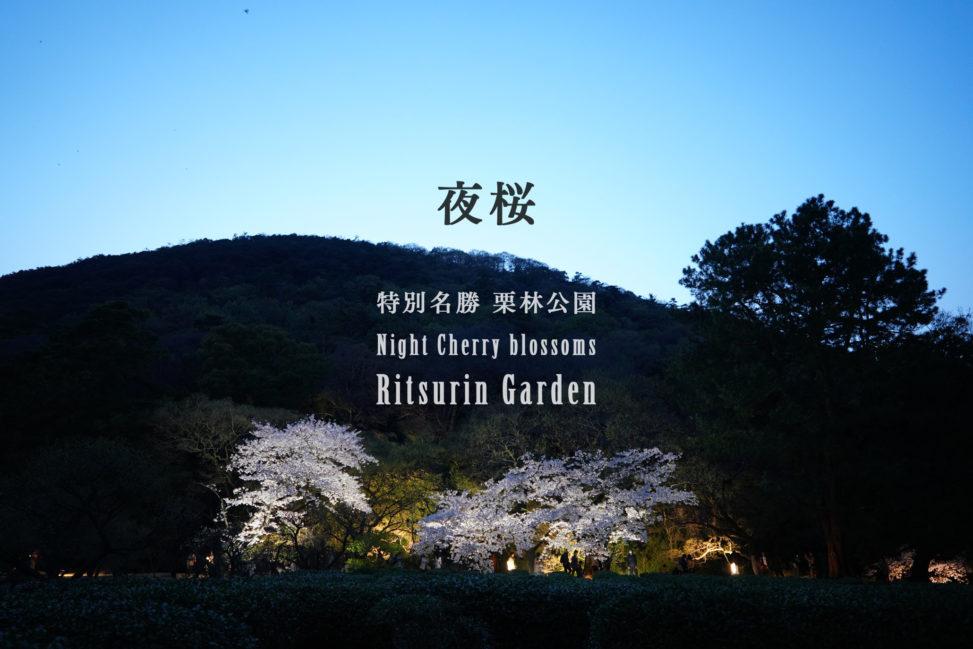 大名庭園 栗林公園、春のライトアップ - Night Cherry blossoms at Ritsurin Garden
