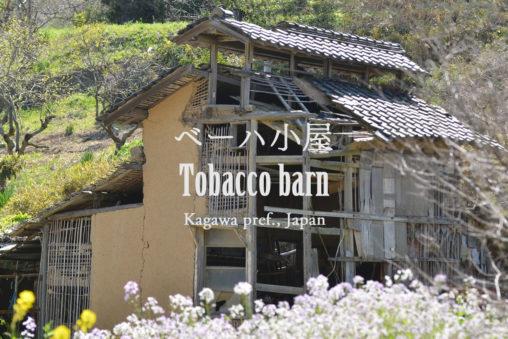 瀬戸内海、粟島(香川県三豊市)ベーハ小屋 – Tobacco barn